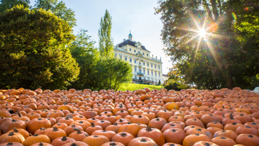Pumpkin exhibition © Tourism & Events Ludwigsburg, Benjamin Stollenberg